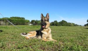 dog-training-Delray Boca Raton FL