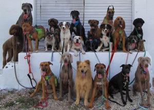 Group Dog Training Delray Beach Florida